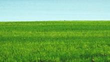 Grassy Field Against River
