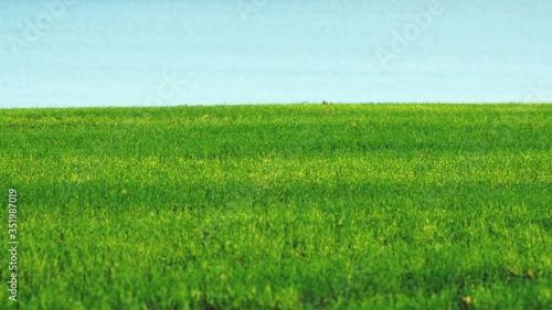 Fotografia, Obraz Grassy Field Against River