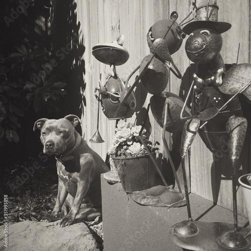 Fotografiet Staffordshire Bull Terrier Sitting Besides Sculptures In Yard