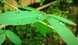 canvas print picture - Close-up Of Leaves Growing Outdoors