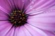 Leinwanddruck Bild - Close-up Of Pink Flower Blooming Outdoors