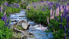 Purple Flowers Growing By Plants