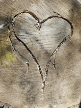High Angle View Of Heart Shape Carved On Tree Stump