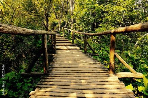 Fotografiet Wooden Footbridge Amidst Trees