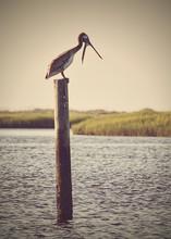 Bird Perching On Wooden Post B...