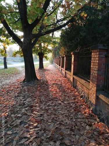 Obraz na plátně Sunlight Falling On Dry Leaves In Park
