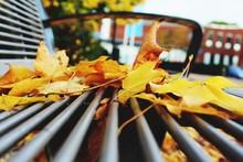 Autumn Leaves On Metallic Bench