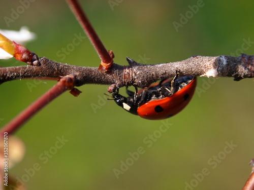Fotografie, Obraz Close-up Of Ladybug On Plant