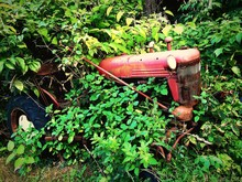 Abandoned Tractor Covered With Trees Outdoors