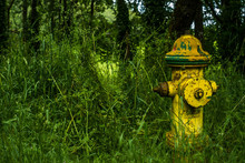 Yellow Fire Hydrant In Grass