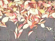 High Angle View Of Autumn Leaves Fallen On Ground