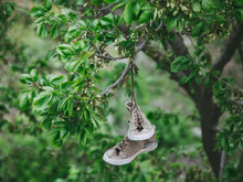 Old Worn Sneakers Hang On A Tree Branch.