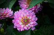Leinwanddruck Bild - Close-up Of Pink Flowers Blooming Outdoors