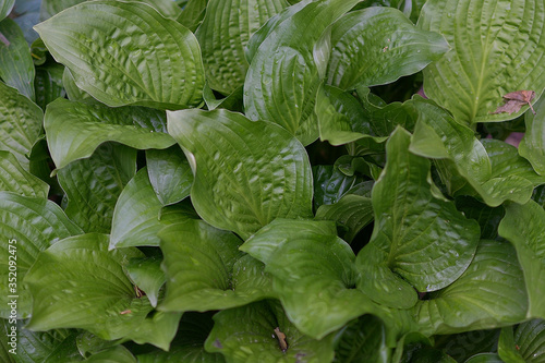 IN SPRING, GREEN LEAVES - NATURE
