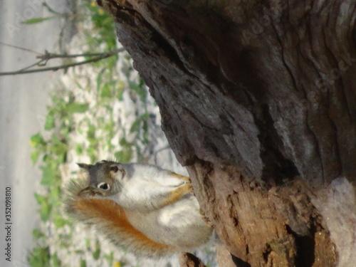 Alert Squirrel Outdoors Canvas Print