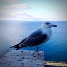 Close-up Of Seagull In Sea