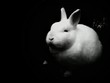 Close-up Of A Rabbit Over Black Background