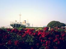 Flowers Against Clear Sky