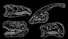 Dinosaurs Skulls Line Hand Dra...