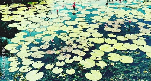High Angle View Of Lily Pads Floating On Lake Canvas-taulu