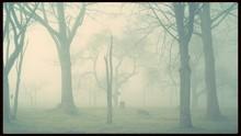 Trees Enveloped In Mist