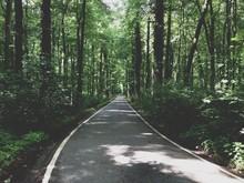 Long Treelined Empty Road