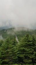 Scenic View Of Forest In Mount Mitchell State Park During Foggy Weather