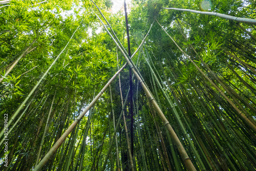 Low Angle View Of Bamboos Poster Mural XXL