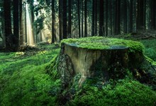 View Of Tree Stump In Forest