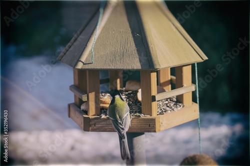 Canvas Bluetit In Birdhouse