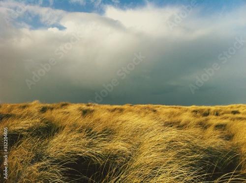 Fotografija Windswept Grass Against Cloudy Sky