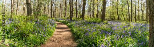Walk through the woods Canvas Print