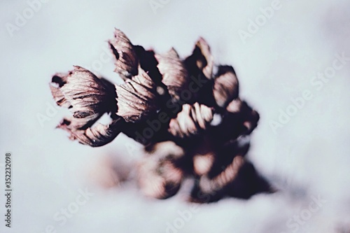 Close-up Of Dry Flowers Fototapet