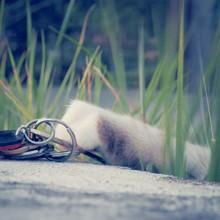 Cat Reaching For Keys