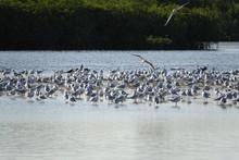 Un Groupe D'oiseaux Migrateurs...