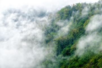 Fototapeta Do pokoju Scenic View Of Forest Against Sky