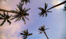 Background Of Tropical Beautif...