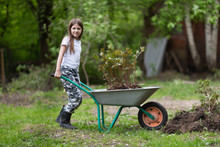 Caucasian Girl Child Works In The Garden, Kid With A Wheelbarrow Transports Peony Seedlings, A Girl Transplanted Peonies In The Garden
