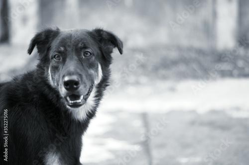 Fotografia Close-up Of Dog On Field