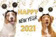 Leinwandbild Motiv Portrait of two happy dogs wearing a new year diadem on a white background with golden party garlands and text happy new year 2021