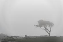 A Single Lone Tree Silhouette ...