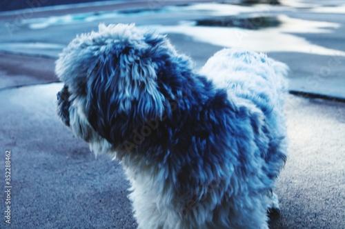 Fotografia Close-up Of Dog Outdoors