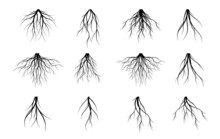 Set Vector Roots. Trees And Element Of Nature.