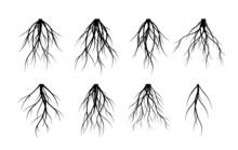 Set Vector Roots. Trees And El...
