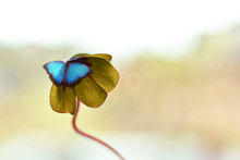 A Blue Butterfly Perched On A ...