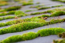 Close-up Of Moss Growing On Land