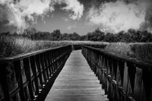 Footbridge Amidst Trees Agains...