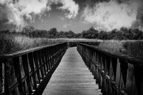 Stampa su Tela Footbridge Amidst Trees Against Sky