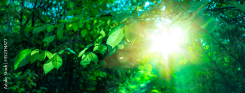 sun beautifully illuminatin from green leaf on blurred background natural leaves plants landscape, ecology, fresh wallpaper concept. #352314677