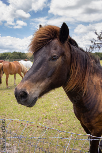 Horses on a ranch in north central Florida near Ocala